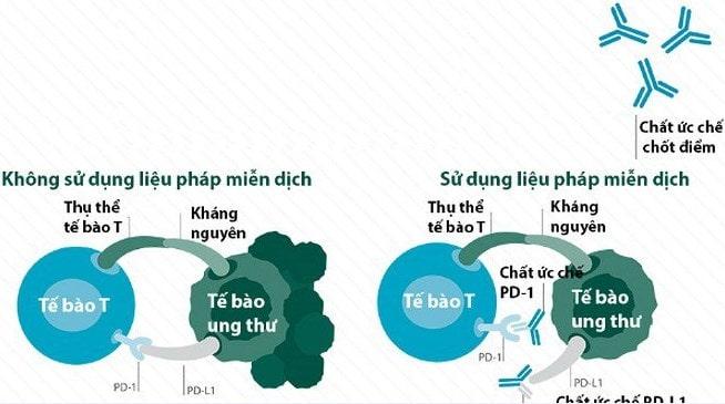 sinh thiết kim phổi - co che dieu tri ung thu cua lieu phap uc che chot kiem soat mien dich