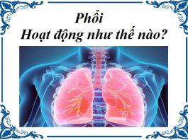 phoi hoat dong nhu the nao