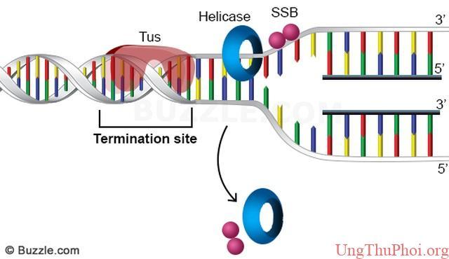 Nghiên cứu mới mở ra khả năng chặn đứng ung thư ở cấp độ phân tử - 2