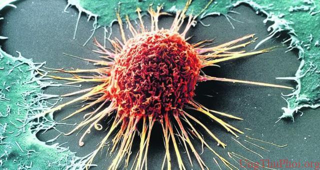 Tiêu diệt tế bào ung thư bằng cách khiến chúng…ăn thịt chính mình - 1