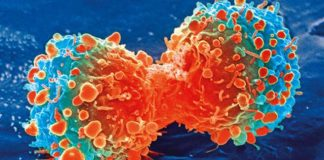 Phát hiện thứ ngay trong cơ thể khóa được ung thư gan - 1