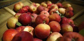 Ăn táo tốt đủ đường, ngăn ngừa cả ung thư - 1
